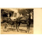 Harness Racer by House Real Photo