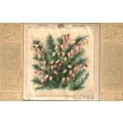 Flower Bog Rosemary Printed Silk