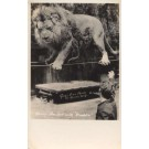 Lion on Wires El Monte CALIFORNIA Real Photo