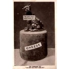 Cheshire Cat on Cheese Real Photo
