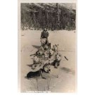 Dogs Siberian Husky Drawn Sled Real Photo