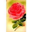 Blooming Flower Rose
