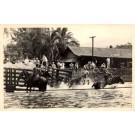 Man on Horse Lassoing Bull RP