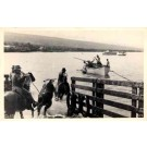 Hawaii Cattle Loading Real Photo