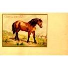 Shetland Pony French