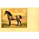 Norfolk Horse French