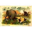 Blacks Hunting Elephants Africa Advert Chocolate