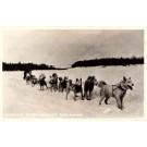 Siberian Husky-Drawn Sledge Real Photo