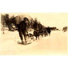 Dogs-Drawn Sled Real Photo