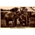 Broncho Bill's Performing Elephants Real Photo