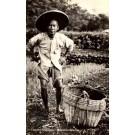 Chinese Gardener Real Photo