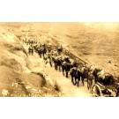 Artillery Horses Army Maneuvers1913 RP