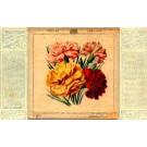 Carnation Printed Silk