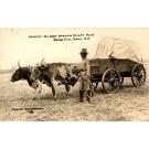 Bull-Drawn Wagon 101 Ranch RP KA