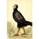Bird Hand-Drawn WW1 French Satire
