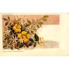 Wild Flowers Australia Art Nouveau