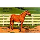 Horse & Advert Hotel Ranch CA