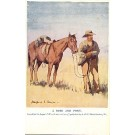 Boer War Horse English