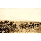Hawaii Horse Soldier WWI RPPC