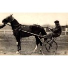 Harness Racer Sports Real Photo