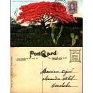 HAWAII Honolulu Ponciana Regia
